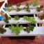 ชุดปลูกผักไร้ดิน (Hydroponics) 16 ช่องปลูก thumbnail 4