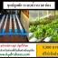 ชุดปลูกผักไร้ดิน 60 ช่องปลูก thumbnail 1