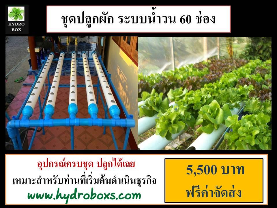 ชุดปลูกผักไร้ดิน 60 ช่องปลูก