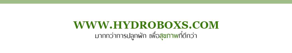HYDROBOXS มากกว่าการปลูกผัก เพื่อสุขภาพที่ดีกว่า