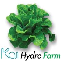 ร้านKai Hydro Farm