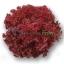 เมล็ดพันธุ์ Red Coral (เคลือบ) 100 เมล็ด thumbnail 2